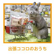 出張ココロのおうち (うさぎ用品販売ブース)