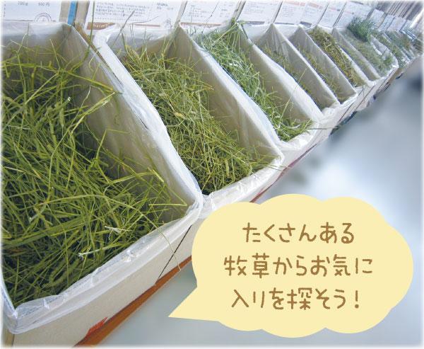 ご試食牧草を選ぼう